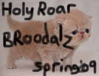 Holy Roar Spring '09 Digital Sampler