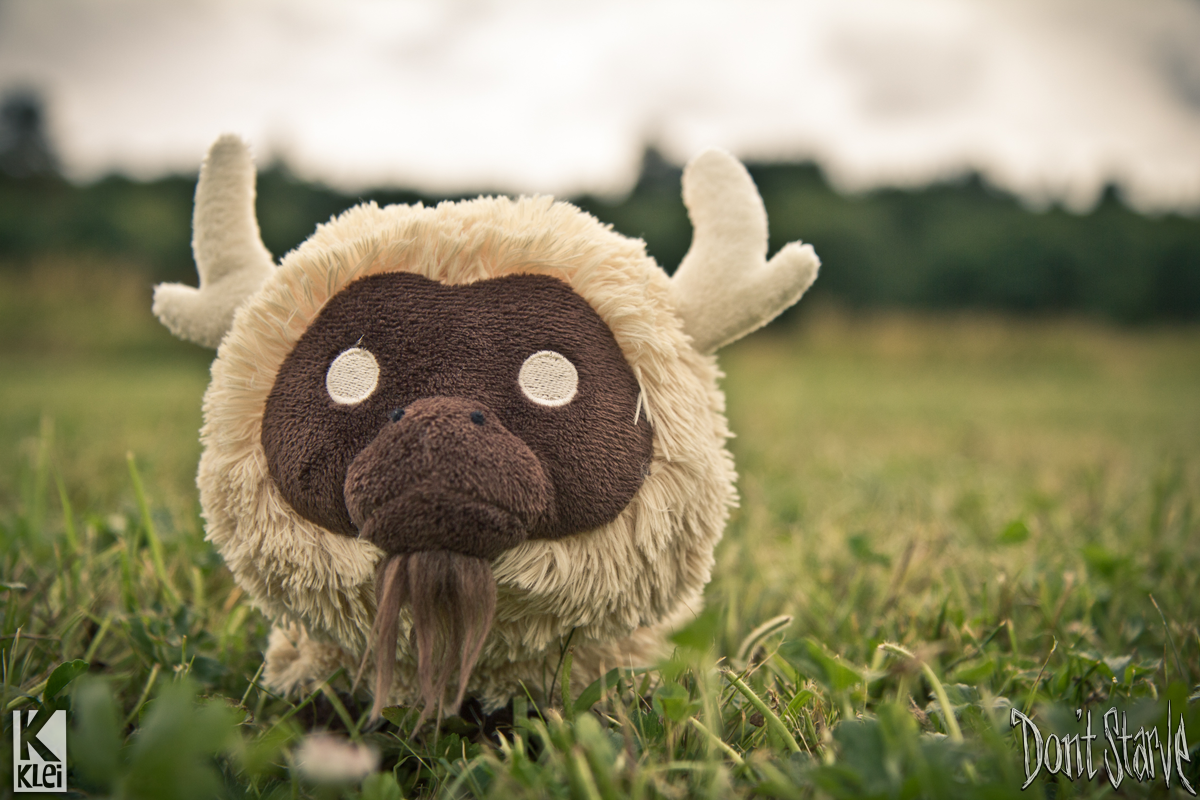 Pin beefalo pictures on pinterest